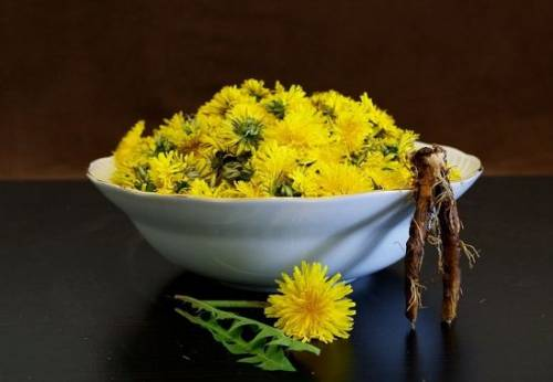 A plate of dandelions and dandelion root