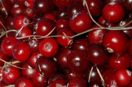 Ripe and juicy cranberries