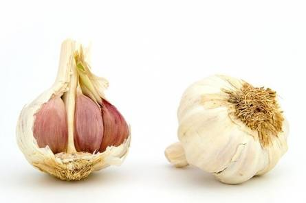 Garlic and UTI