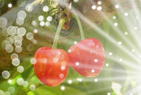 Two cherries on a tree