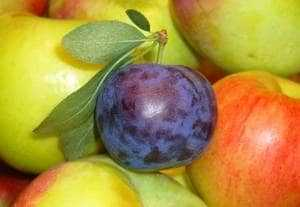 Fruits. Apples and plum