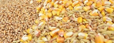 Entire grains