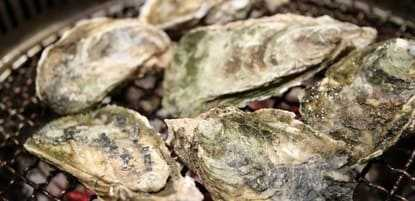 Raw oysters during pregnancy
