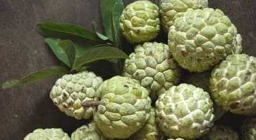 Custard apple benefits in pregnancy