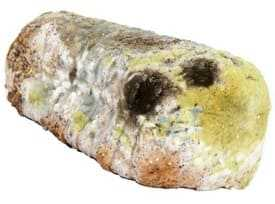 Bread with mould
