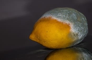 Lemon with mold
